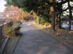 新見附橋付近の遊歩道